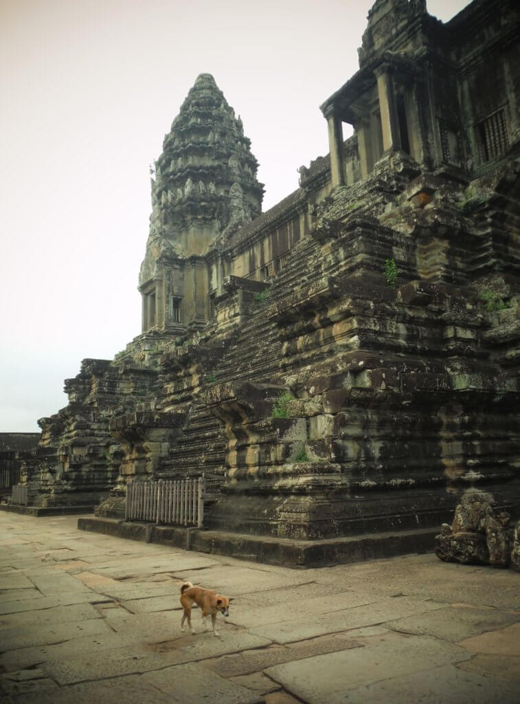 Dog at Angkor Wat
