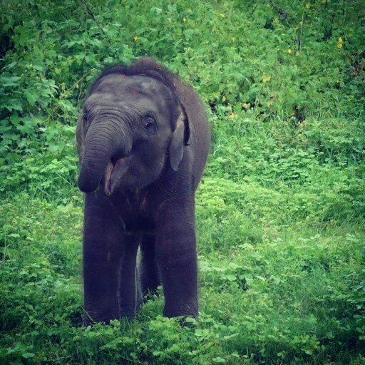 Seeing Baby Elephants in Kaudulla Sri Lanka