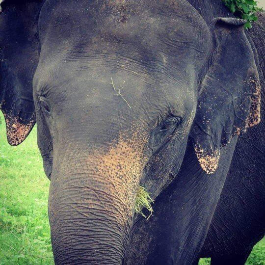 Seeing elephants in Sri Lanka national parks