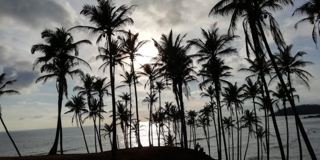 coconut trees Mirissa Sri Lanka