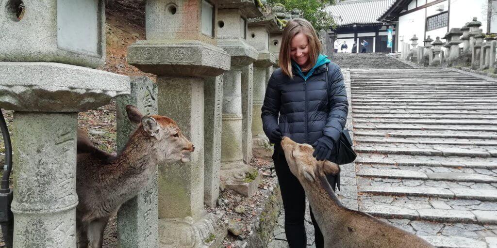 Feeding deer in Nara park Japan