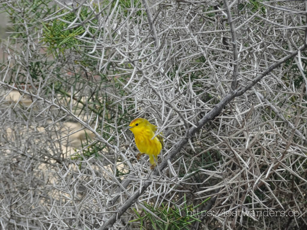 Small bird in Galapagos