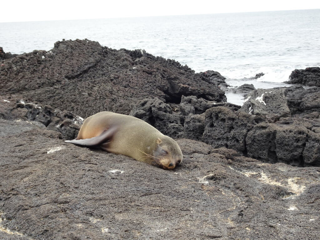 Sea lion pup sleeping