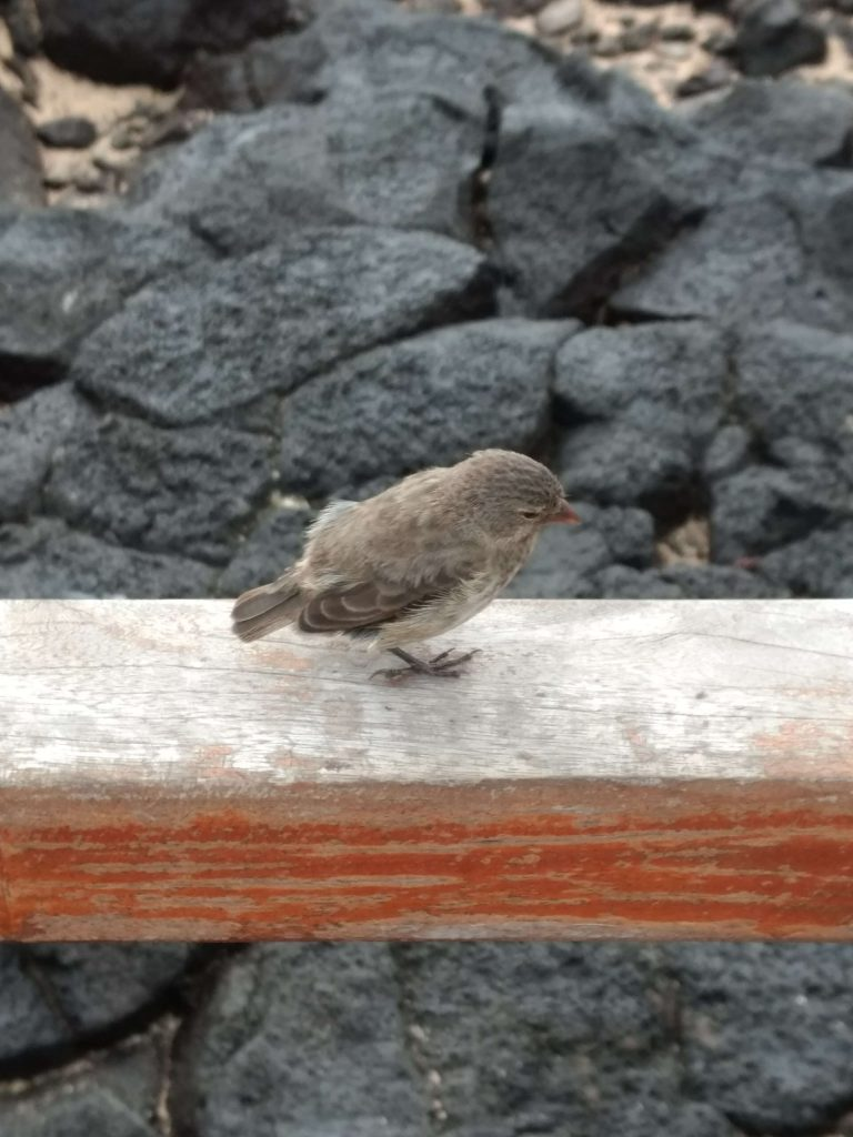 the greatest animals of the galapagos islands 2020