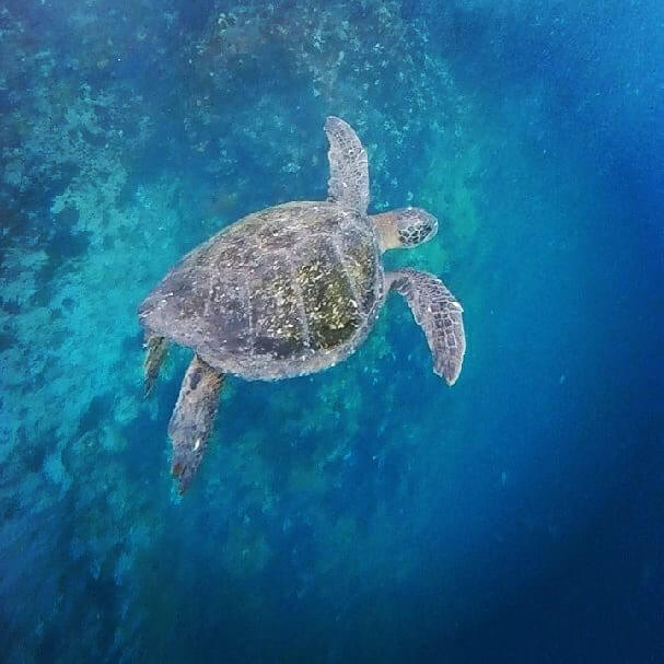 the greatest animals of the galapagos islands 2021
