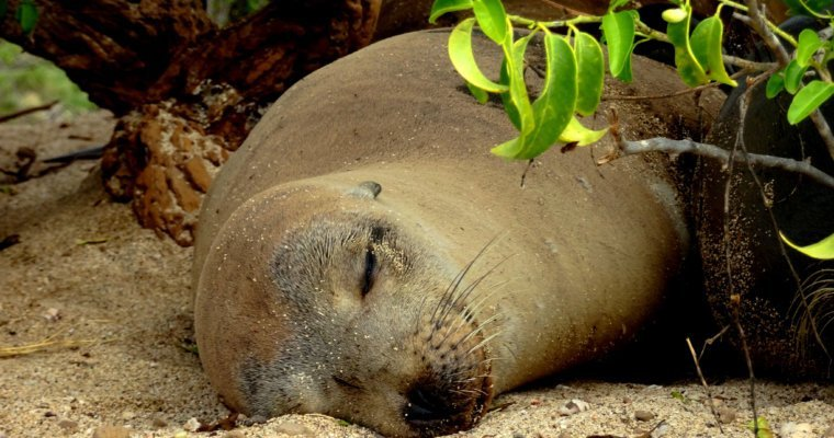 Bucket list trip – The animals of the Galapagos Islands
