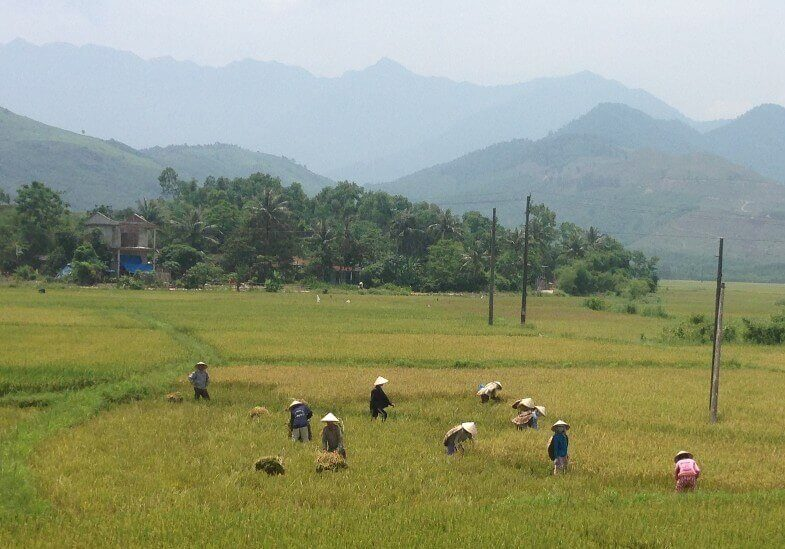 Rice Paddies in Cambodia