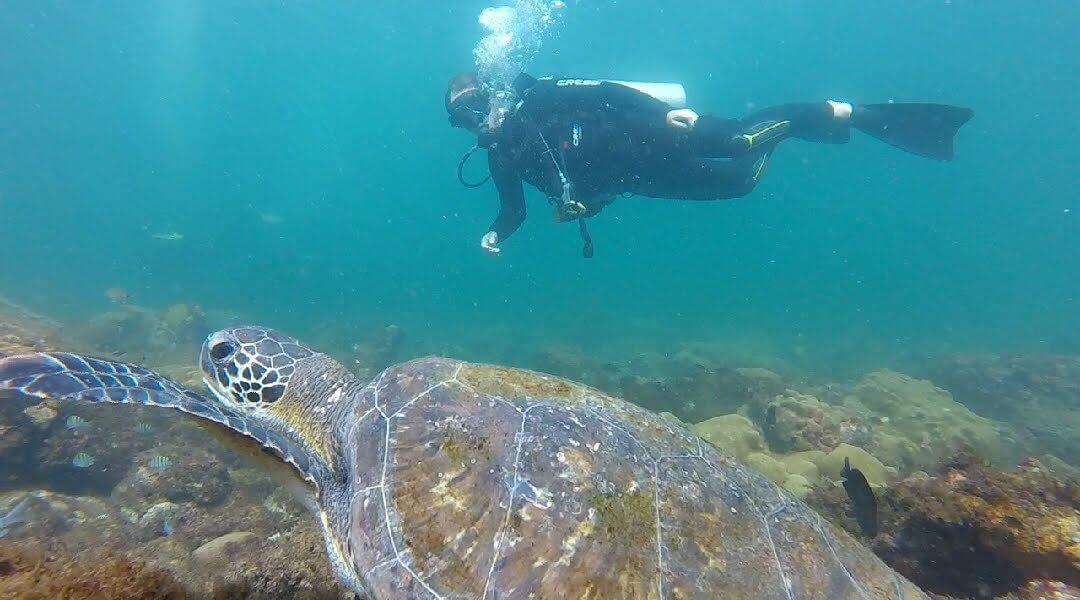 Swim with turtles Rio Brazil