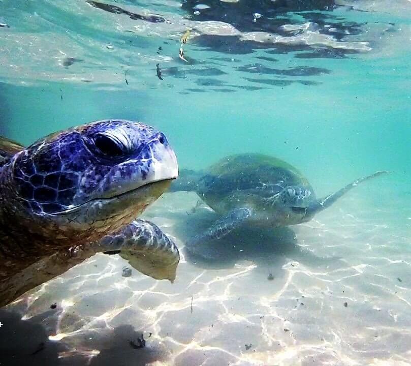 Green Turtles Sri Lanka