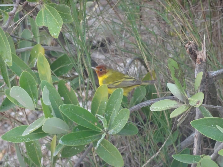 Holbox Bird